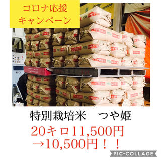 ひまひまらんど様専用✳︎宮城県産つや姫25キロ(米/穀物)