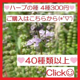 ㉗全44種♪ ハーブの種 お好きな物 4種類 セット(その他)