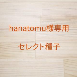 hanatomu様専用 セレクト種子 6袋(野菜)