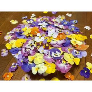 お花屋さんが作ったビオラのドライフラワー山盛り70冠です‼️(ドライフラワー)