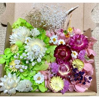 ハーバリウム花材 グリーン&ピンク(ドライフラワー)