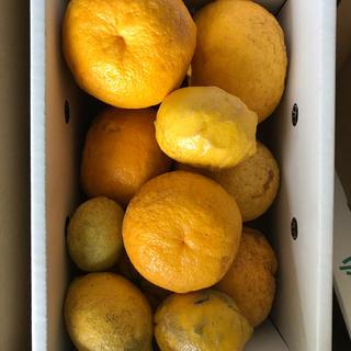 甘夏 レモンのおまけ付き 無農薬 無肥料 国産 4、5キロ(フルーツ)