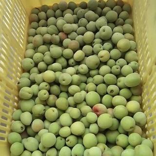 ずみちゃん様専用。大梅6キロ。無農薬。自然栽培。広島県産。サイズ混。(フルーツ)