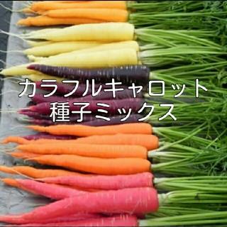 カラフルキャロット種子 6種ミックス(野菜)
