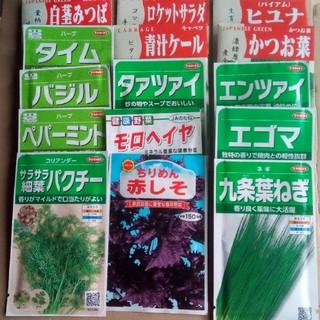 家庭菜園 畑向き 春まきの野菜の種 5種類セット 小分け(野菜)