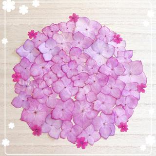 【押し花 素材】ピンクアジサイ⑤(各種パーツ)