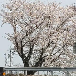 としぴょん様専用(バレッタ/ヘアクリップ)