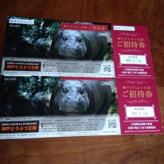 神戸どうぶつ王国 招待券2枚(動物園)