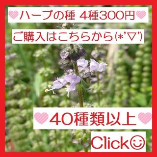 ㉘全44種♪ ハーブの種 お好きな物 4種類 セット(その他)