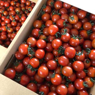 キャロルパッションミニトマト 2キロ(野菜)