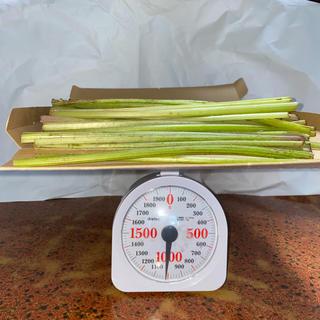 フキ 1キログラム 送料無料です。 最短土曜日発送です(野菜)