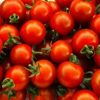 熊本県産  採れたて あまーいミニトマト  産地直送(野菜)