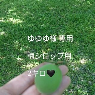 専用 ゆゆゆ様 青梅2キロ(フルーツ)