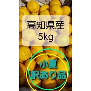 小夏(ニューサマーオレンジ)訳あり品5㌔(フルーツ)
