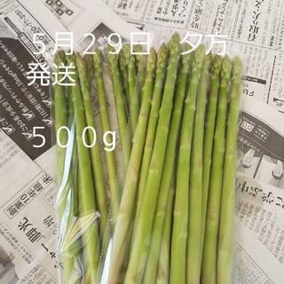 訳あり アスパラガス 出雲市産 500g 夕方発送 ネコポス(野菜)