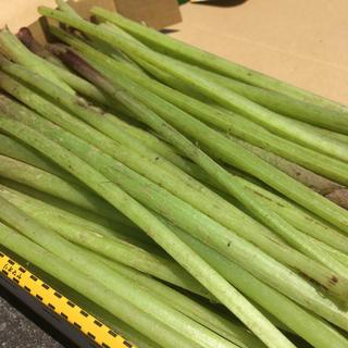 ふき(サイズ60)(野菜)