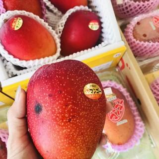 【訳あり!激安!】沖縄県産☆マンゴー 1玉(フルーツ)