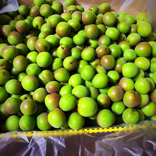 無農薬 小梅 5キロ(フルーツ)