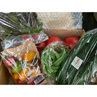 朝採りサラダセット お野菜6〜8種類(そのうちトマト3〜4種類)(野菜)