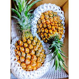 甘い!人気の沖縄産スナックパイン 2玉(フルーツ)