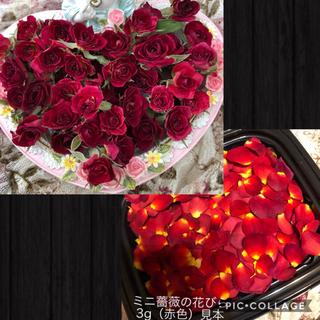 sacrifice様専用★ミニ薔薇(開花)20輪+5輪セット&花びら3g赤色(ドライフラワー)
