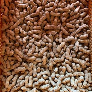 種子島産落花生 600g  農薬不使用(米/穀物)