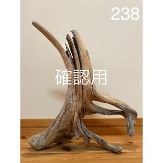 流木【238】