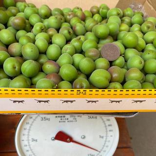 手摘み小梅 2キロ 無農薬(フルーツ)