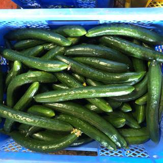きゅうり5キロB品BM品朝どり新鮮きゅうり(野菜)