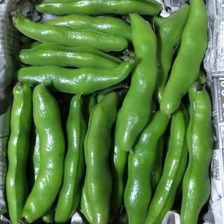 農家直送 空豆2kg(箱込み)(野菜)
