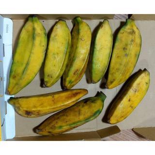お買い得!沖縄産プランテンバナナ ミャンマーバナナ コンパクトに1kg(フルーツ)