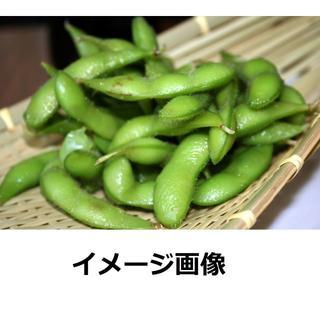 枝豆の種 北海道産 ビールのお供に! 30グラム約100粒 今が撒き時 送料無料(野菜)