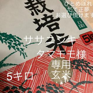 【タマモモ様】専用 ササニシキ 5kg  玄米(米/穀物)