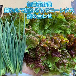 本日限定*採れたて新鮮*無農薬野菜*細ねぎ&サニーレタスの詰め合わせ*翌日配達(野菜)
