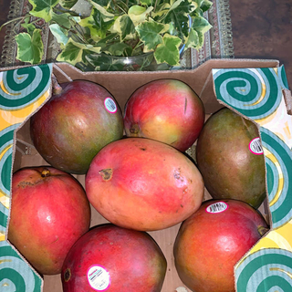 コストコ - コストコ アップルマンゴー7個入り