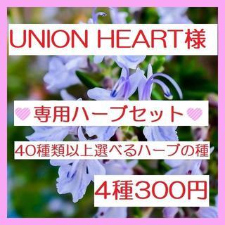 UNION HEART様専用 ハーブの種セット(その他)