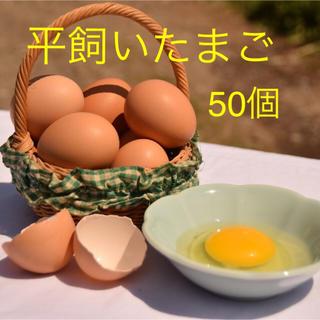 平飼いたまご ✴︎高原卵10個入り5パック✴︎ 国産もみじの卵 新鮮(野菜)