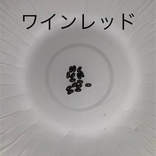 クリスマスローズの種★ワインレッド15粒•イエロー50粒(その他)