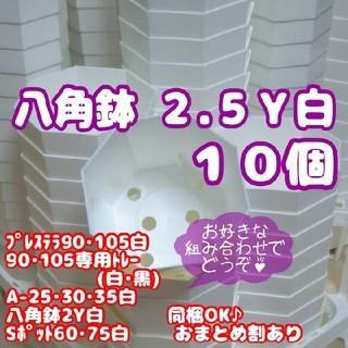プラ八角鉢 カネヤ【2.5Y】10個 多肉植物(プランター)