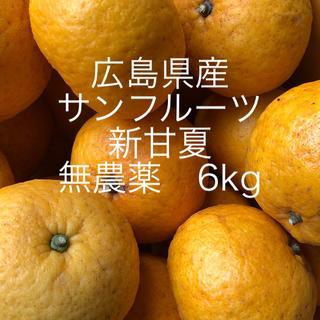 広島県産 新甘夏 サンフルーツ 6kgお入れして発送致します😋