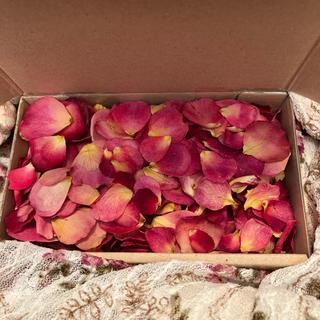 大容量!ミニ薔薇の花びら6gまとめてセット(うすピンク)ドライフラワー★花弁(各種パーツ)