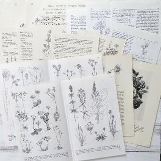 古い植物画&古い楽譜のアソートセット*b 17枚(書)