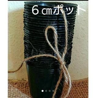 黒ポリポット6㎝ 30個➕花の種(プランター)
