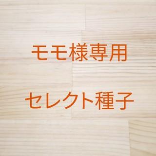 モモ様専用 セレクト種子 3袋(野菜)