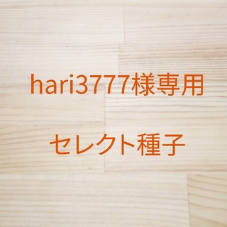 hari3777様専用 セレクト種子 2袋(野菜)