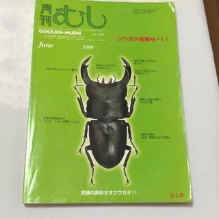 月刊むし 1999年6月 No,340 クワガタ特集号11(虫類)