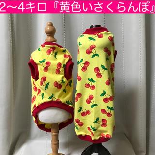 2〜4キロ未満『黄色いさくらんぼ』メルロコ ダックス 犬服(ペット服/アクセサリー)