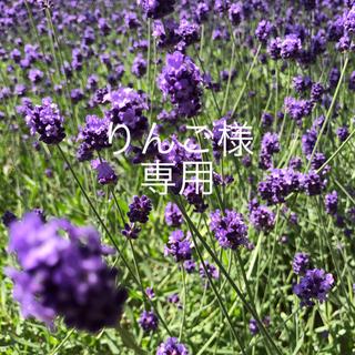 motherways - マザウェイズ 22cm クロックス風 サンダル 紫