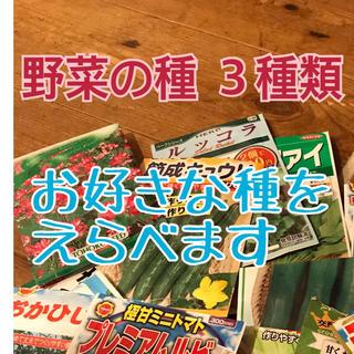 6月に蒔ける 野菜の種 3種類(野菜)