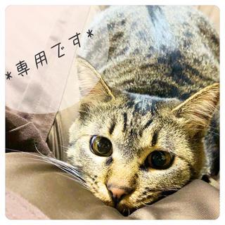 Tabby ete*もくもくパンケーキスタイ 専用出品(スタイ/よだれかけ)